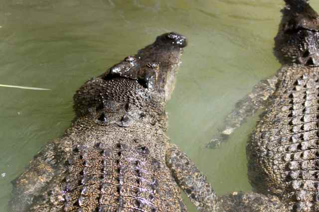 crocs 3
