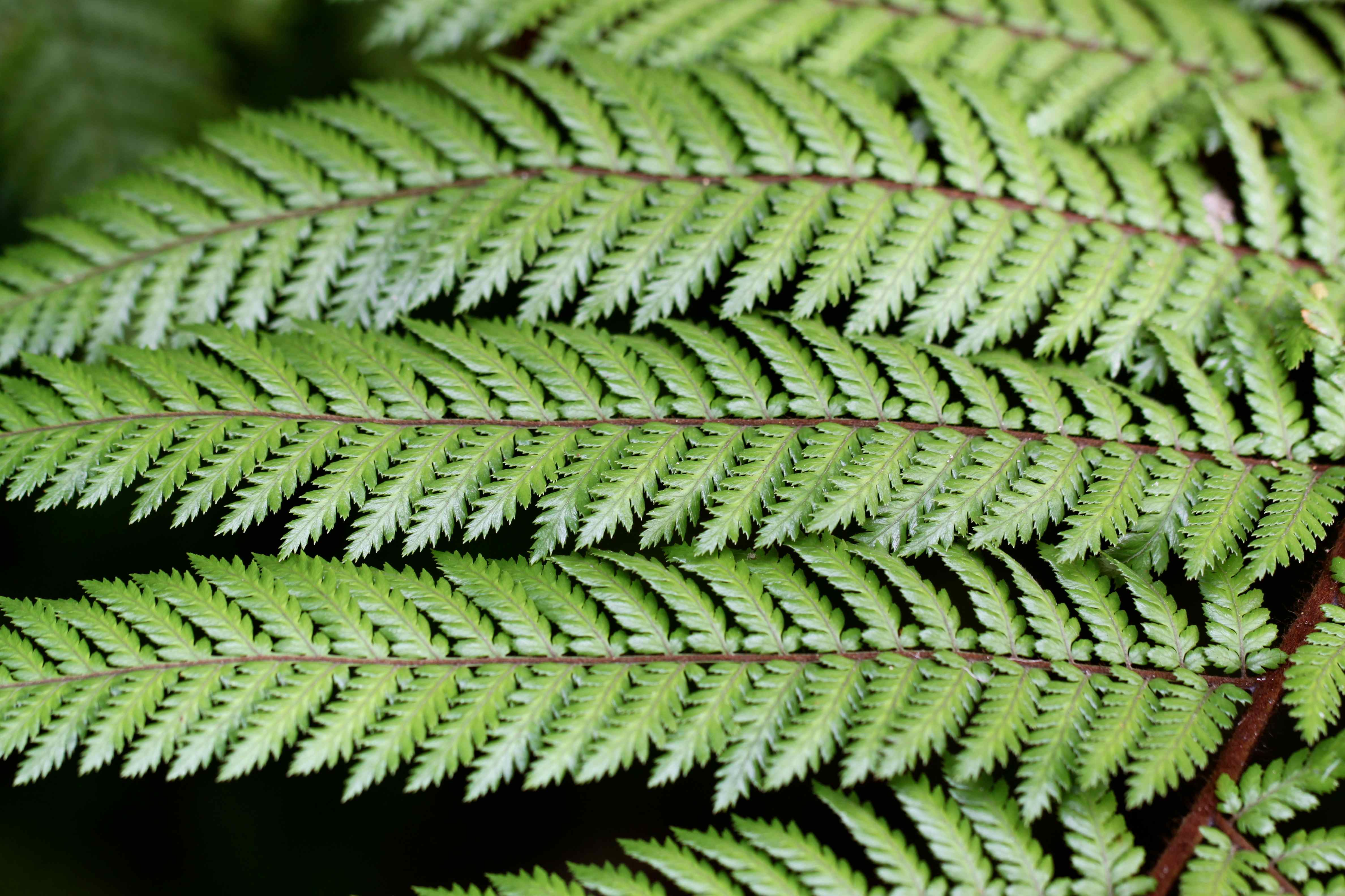 a shoppers guide to buying outdoor ferns costa farms - Fern Types