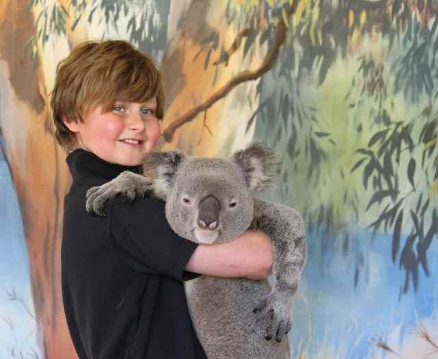 H and Koala