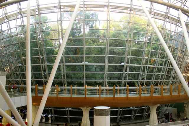 KL rainforest