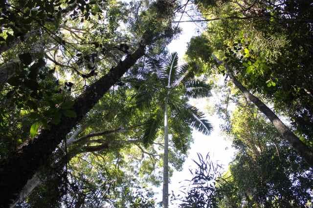 Noosa trees