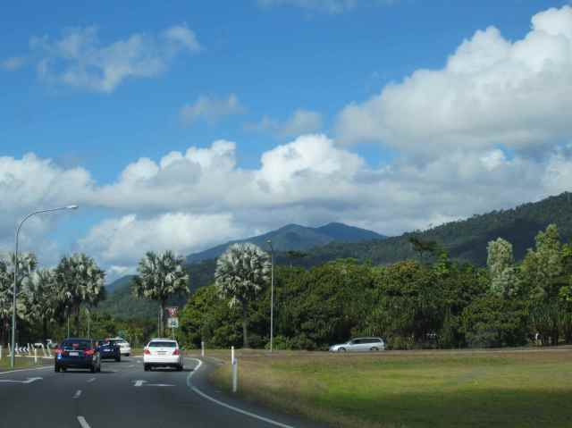 palm trees to Cairns