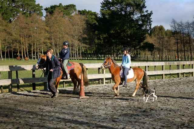 riding lesson 2