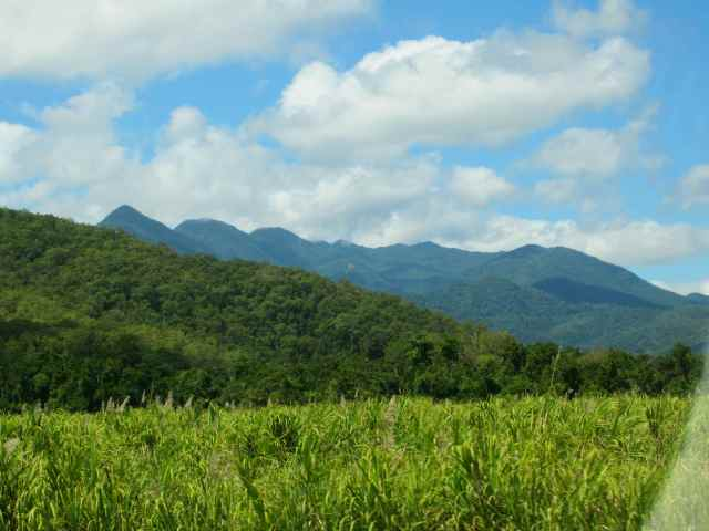 sugar cane mountains