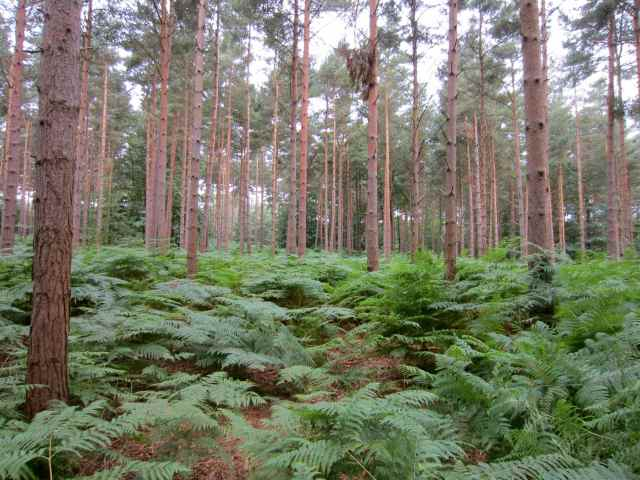the woods otr