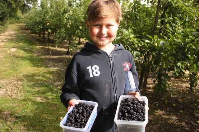 2 tubs blackberries