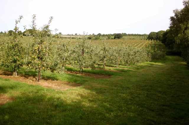 apple orchard 1-9-13
