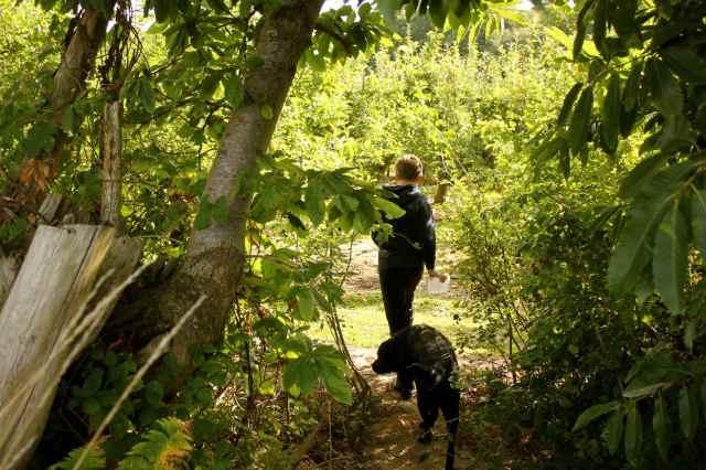 blackberry hunting