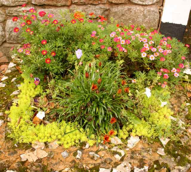 flowers in Sidmouth