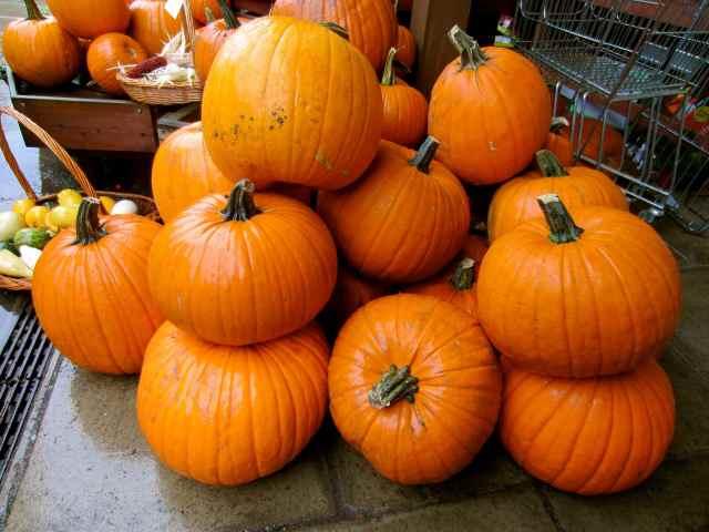pumpkins at Hartley Dyke