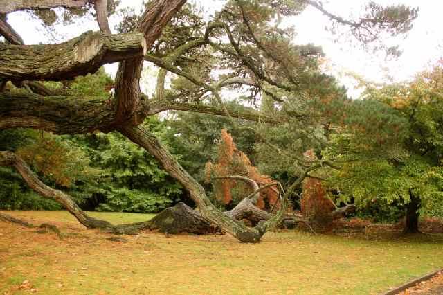 sprawing tree