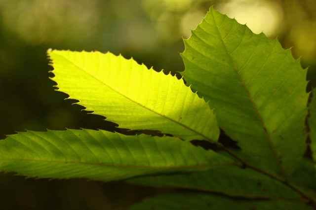 sun on leaf