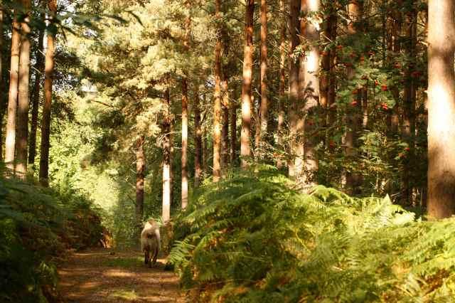 sunshine in woods