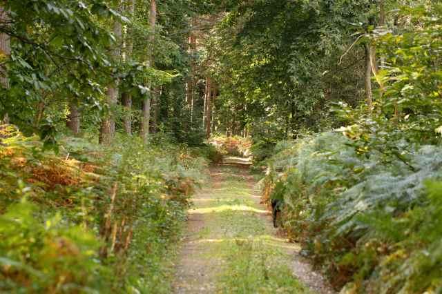 woodland walk 8-10-13