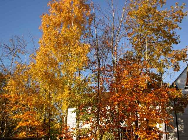 Autumn in Cranbrook