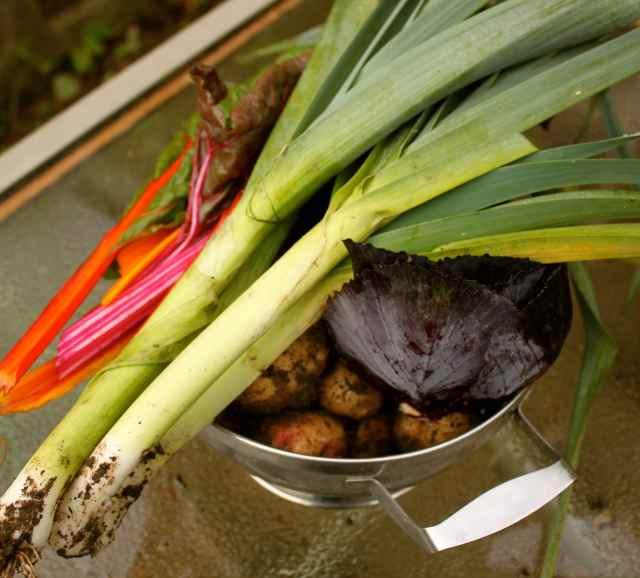 garden veg 24-11-13
