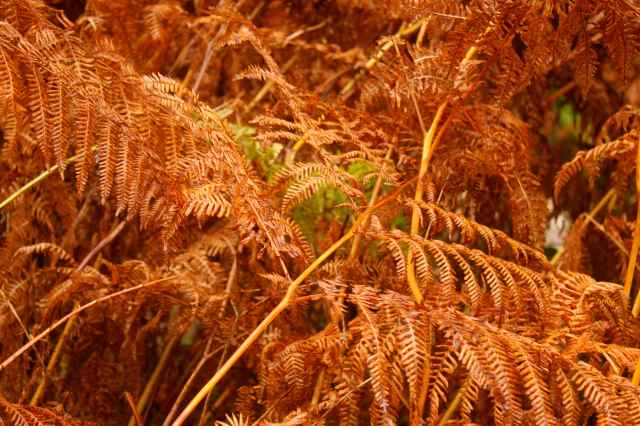 green and brown ferns 1