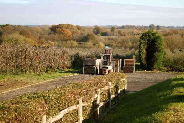 Hartley Dyke apple orchard