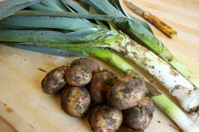home grown potatoes and leeks