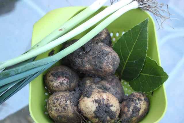 potatoes, bay leaves and leeks