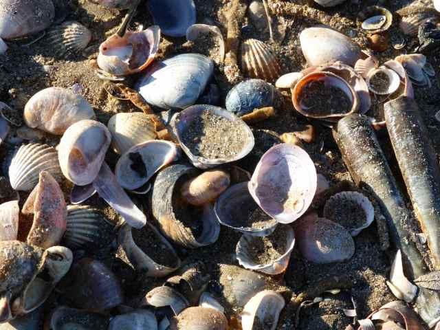 Camber Shells