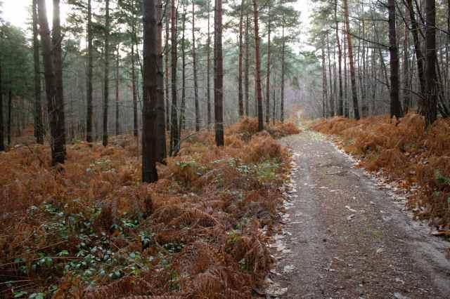 woods 18-12-13