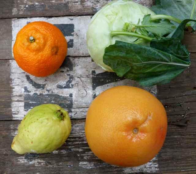 clementine, guava, grapefruit and rutebega