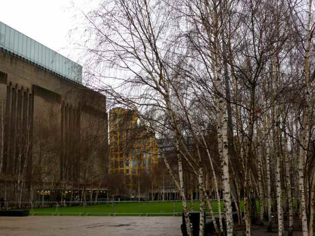 Tate Modern and silver birch