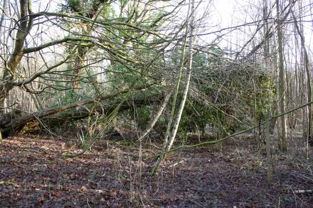 tree across path