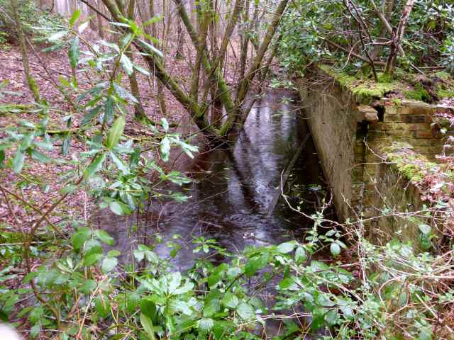 water in woods by wall