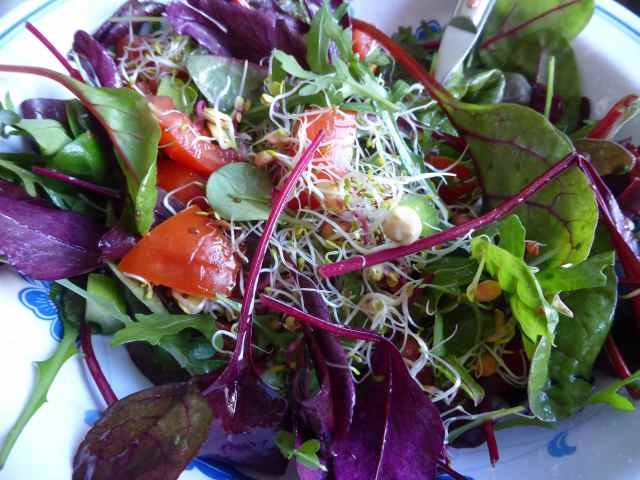 sprout salad 1