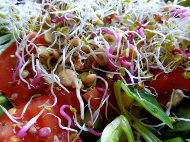 sprout salad 2