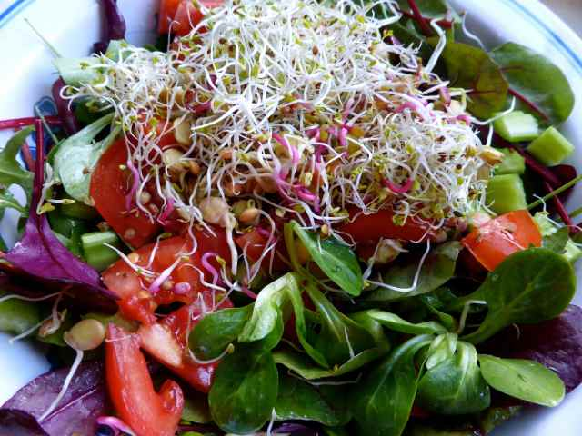 sprout salad 3