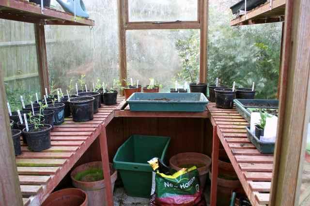greenhouse 22-3-14