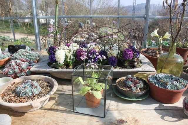 SR greenhouse display