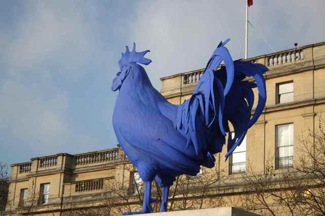 T. Sq. Blue cockerel