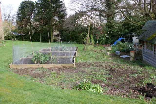 veg garden 22-3-14 2