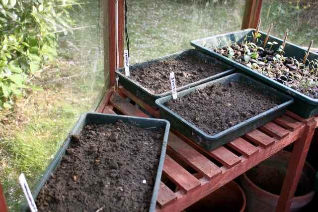 flower seedlings