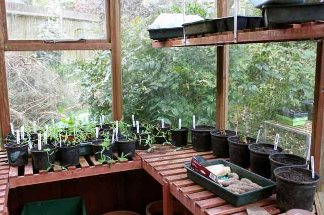 inside greenhouse 1
