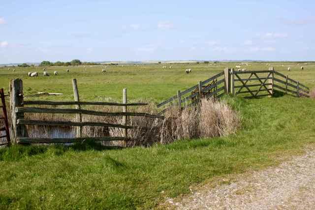 Oare fences 1