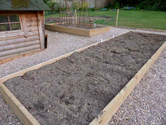 peas and beans beds