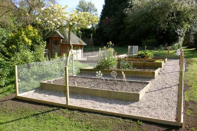 Veg garden 1
