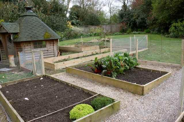Veg garden 6-4-14