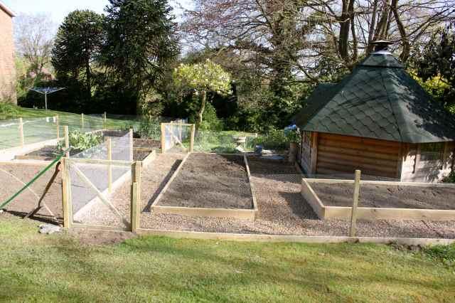 Veg garden 6