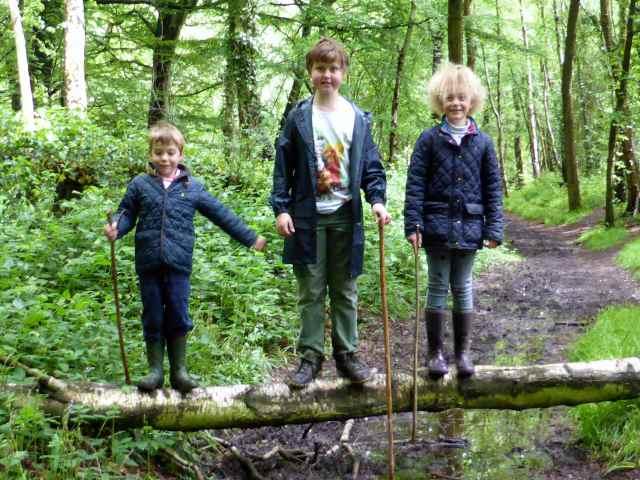 3 on a log