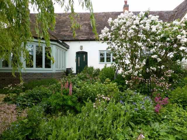 BJ's garden 2