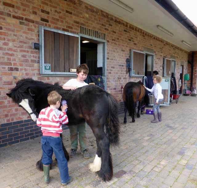 grooming ponies