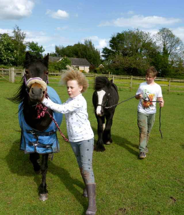 H and H with ponies