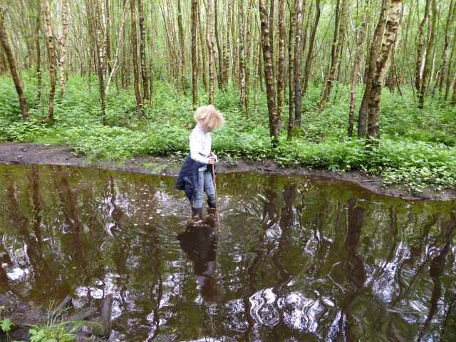 H in pond