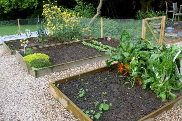 veg garden 5-514